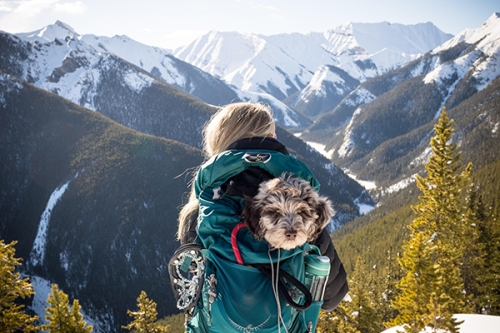 Adventuring-With-Your-Dog-1